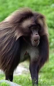 Interestingfactsmonkeys Monkey Facts And Information
