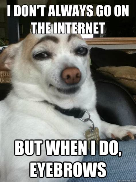 T Dog Memes - i don t always go on the internet but when i do eyebrows eyebrows dog quickmeme