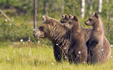 Download Free Wildlife Wallpapers