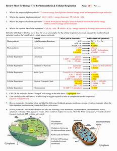 Answer Key For The Review Worksheet