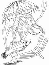 Coloring Ocean Pages Fish Underwater Printable Adult Animals Under Sea Animal Jellyfish Oceans Primarygames Print Medusa Scene Science Getcoloringpages Malvorlagen sketch template