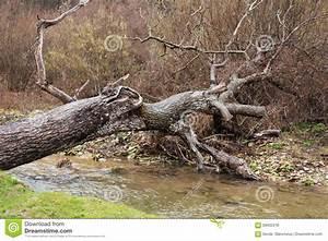 Achat Tronc Arbre Decoratif : tronc d 39 arbre tomb jetant un pont sur une cascade de ~ Zukunftsfamilie.com Idées de Décoration