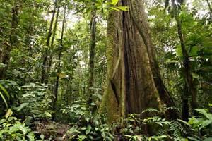 Natural Wonders of Brazil | Natural Wonders of South America