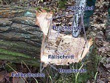 Baum Fällen Technik : file haltebandf wikimedia commons ~ A.2002-acura-tl-radio.info Haus und Dekorationen