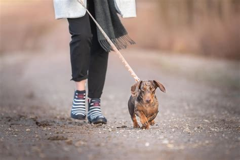 Additional benefits include 10 per cent discounts on each pet in a multipet plan, 24/7 assistance from vetfone to seek advice about. Top 10 most popular breeds in the UK | Animal Friends Pet Insurance