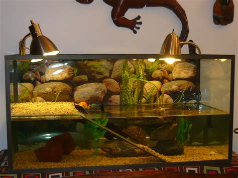 mes deux nouvelles tortue june tortue d eau douce forum la tortue facile