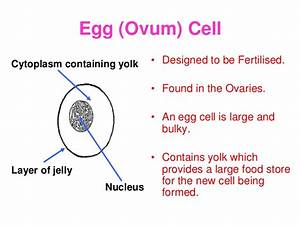 Key Concepts In Biology