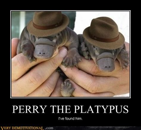 Perry The Platypus Meme - perry the platypus very demotivational demotivational posters very demotivational funny