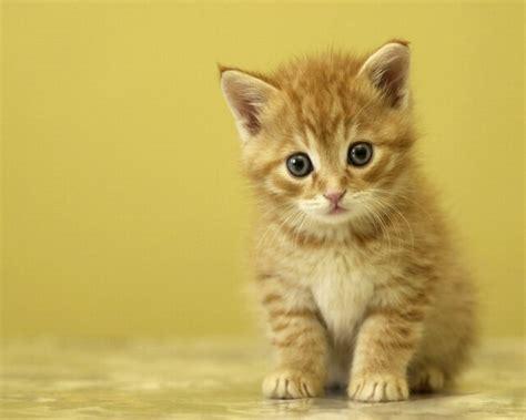 fond d ecran petit chaton mignon wallpaper