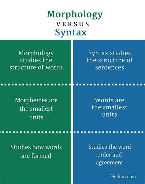 Difference Between Morphology And Syntax  Learn English Grammar Online
