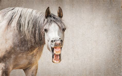 funny horse face  open mouthed animal