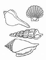 Seashell Coloring Shells Sea Pages Printable Seashells Drawing Types Template Four Drawings Line Print Under Colornimbus Sketch Templates Getdrawings Ocean sketch template