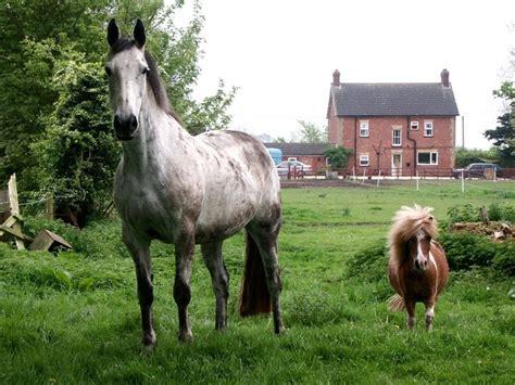 horse  pony  dave hitchborne geograph britain