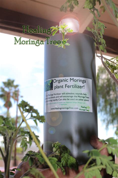 moringa organic fertilizer moringa plant food moringa