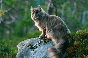 The warrior cats: Galeclan