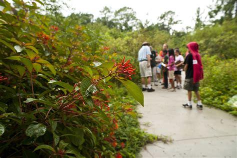 florida wildflower butterfly garden exhibits