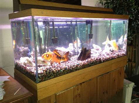contoh aquarium ikan hias air tawar air laut