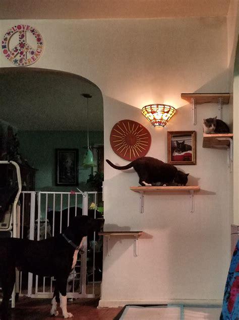 An Excellent Home Improvement Project  Daily Feline Wisdom