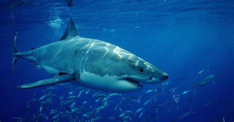 Shark Week Megalodon Fake Documentary Fan Reactions