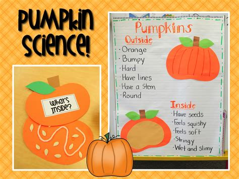 preschool pumpkin science activities mrs ricca s kindergarten pumpkins unit freebie 527