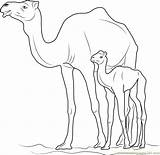 Camel Coloring Kid Pages Coloringpages101 sketch template