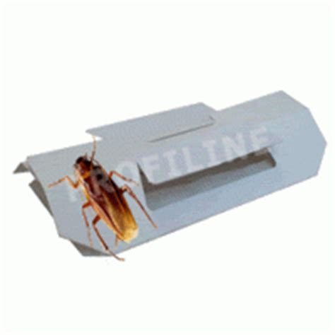 gift gegen vögel kakerlakenfalle f 228 ngt kakerlaken lockstoff gel k 246 der