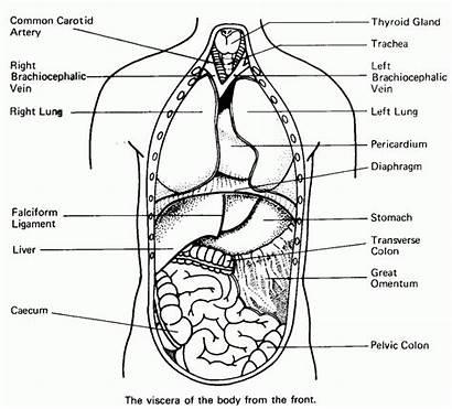 Human Coloring Pages Organ Anatomy Biology Printable