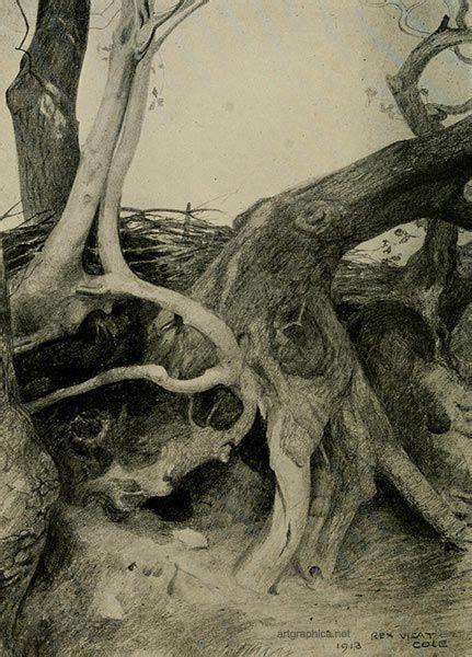 anatomy  trees   draw trees rex vicat cole