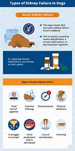 kidney failure dogs signs symptoms treatments