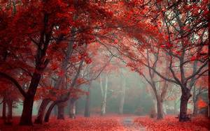 Landscape, Nature, Park, Leaves, Road, Fall, Trees, Mist, Red, Blue, Tunnel, Wallpapers, Hd