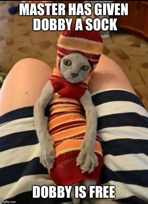 Dobby Memes - dobby is a free cat ummm i meant elf dobby is a free elf imgflip