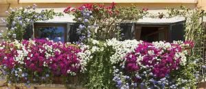 Plantes D Hiver Extérieur Balcon : quelles plantes choisir pour cacher son balcon de la vue ~ Nature-et-papiers.com Idées de Décoration