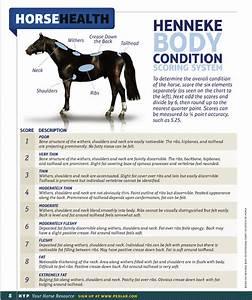 Horse Bit Chart Henneke Body Condition Scoring System Hyp Digital Magazine
