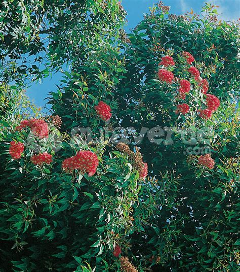 codici armadietti doom 3 plantas olorosas de interior 28 images plantas