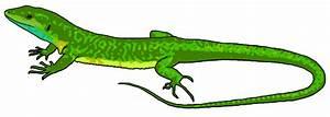 Lizard Clip Art (72+)