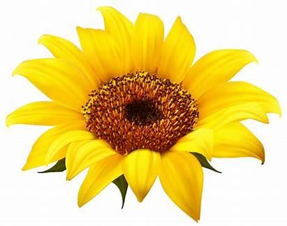 Sunflower Clipart Happy Clip Flower Clipground Sun