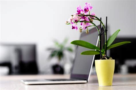Office Desk Flowers by The Best Plants And Flowers For Your Office Orchidrepublic