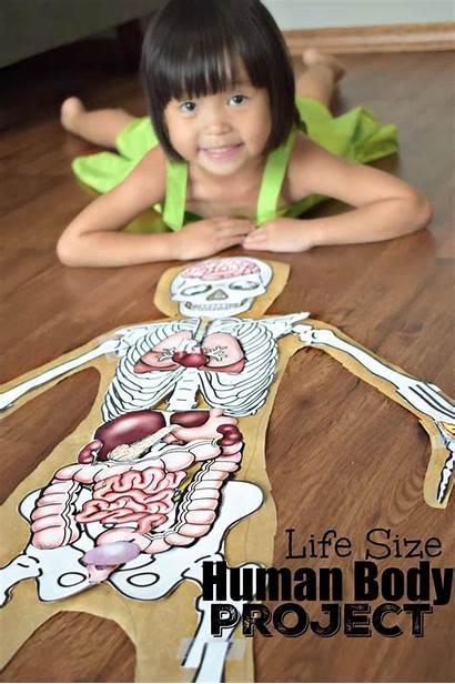 Human Project Teaching Preschool Grade Activities Kindergarten