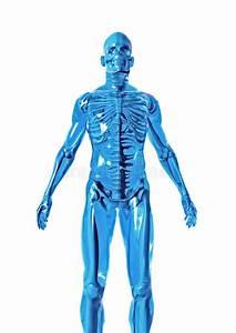 Anatomy Stock Illustration  Illustration Of Body  Physical