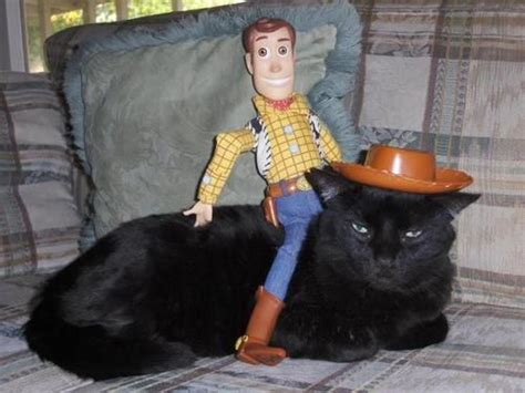 toy story woody rides  black cat funny faxo