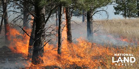 The Importance Of Prescribed Burns National Land Realty Blog