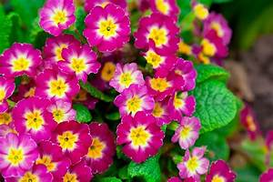 The Best Perennial Flowers To Thrive In Northern Utah