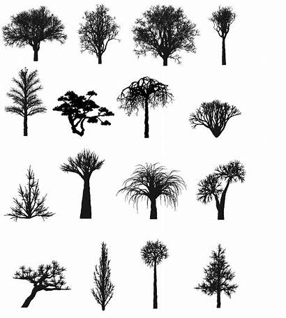 Tree Modeling Natural Types Phenomena