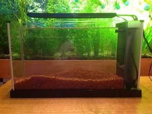 Aquarium Einrichten 60l : der pflanzenaquarianer einrichtung eines 19l becken ~ Michelbontemps.com Haus und Dekorationen
