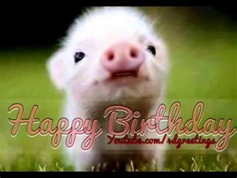 cute  pig singing happy birthday song youtube