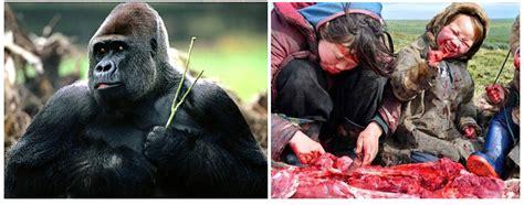 carnivore herbivore human omnivore gorilla earthlings