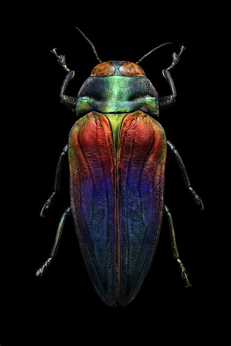 Microsculpture: Macro Photographs of Iridescent Insects ...