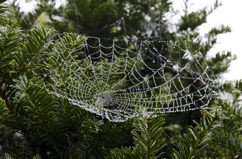 spider web christmas tradition 20 traditions from around the world bitethebuzz