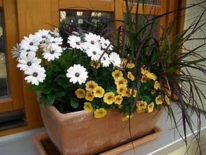 Dauerbepflanzung Für Balkonkästen : kleine balkonk sten f r nordseite dauerhaft bepflanzen aber wie mein sch ner garten forum ~ Frokenaadalensverden.com Haus und Dekorationen