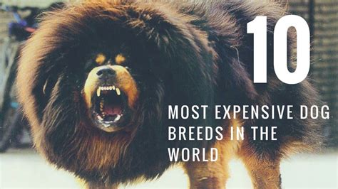 Top 10 Most Expensive Dog Breeds In The World 2017 Youtube
